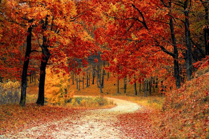 Ontario Parks Add Colour to Fall Vacations