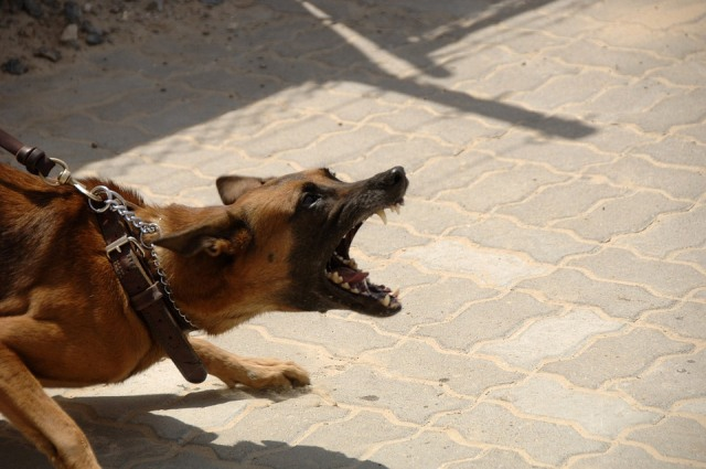 personal injury Dog Owners' Liability