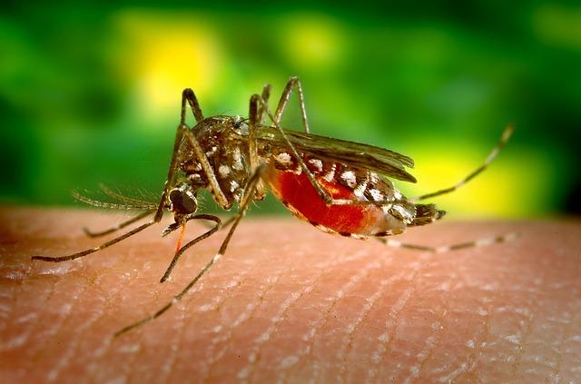 mosquito-borne chikungunya virus