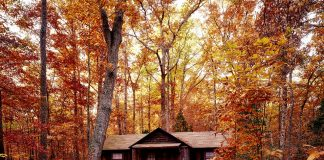 Roofed Accommodation in Ontario Parks