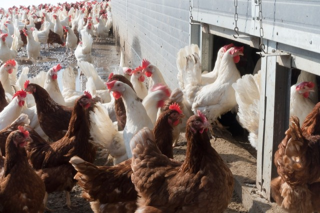"Don't mix ""Cage-free"" and ""Organic"" eggs"