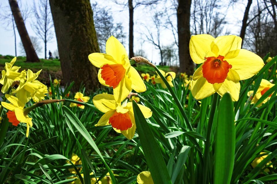 Ontario Blooms