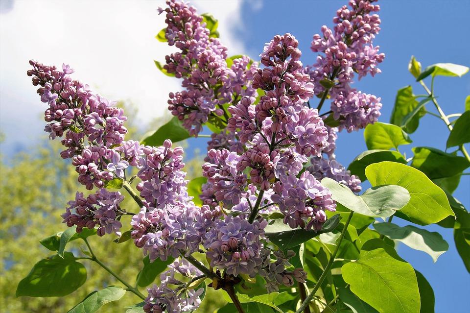 Ontario Blooms AllOntario