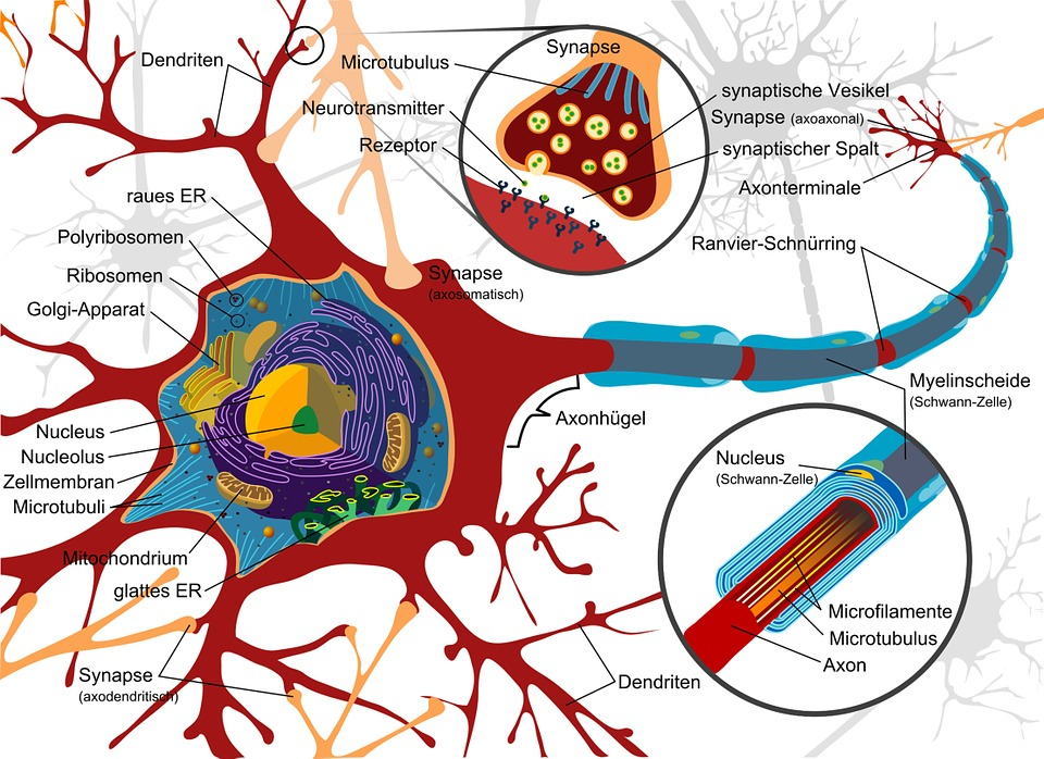 Your brain health boils down to only 5 areas (Part I) AllOntario