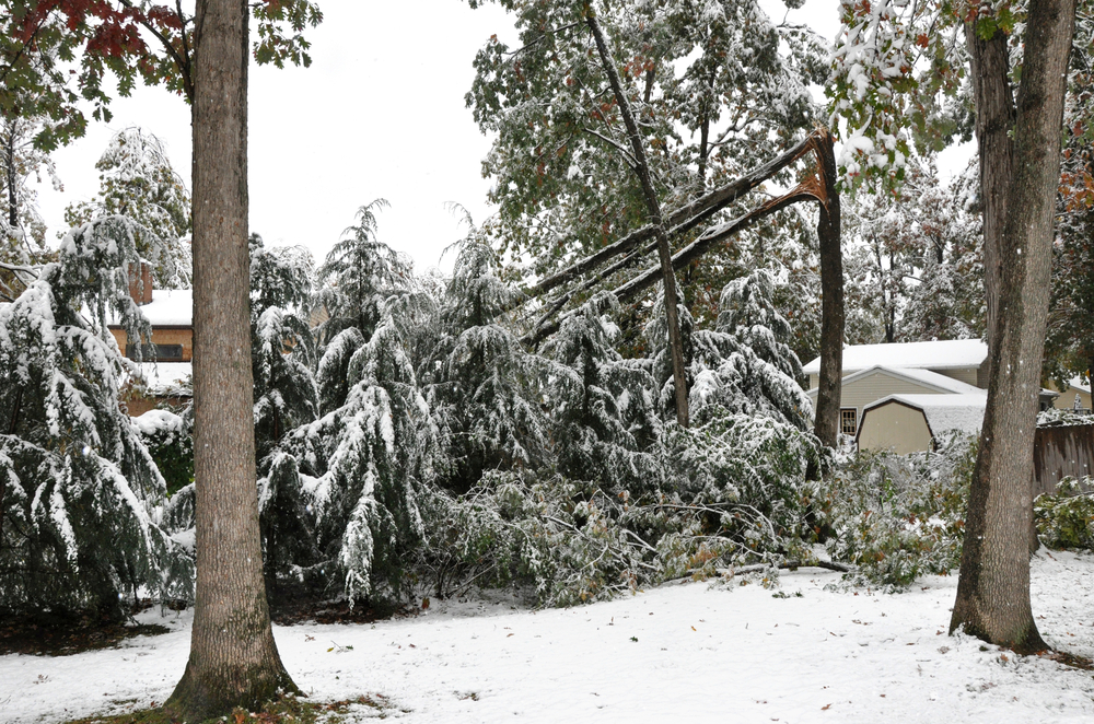 How to Prepare Your Trees for Winter AllOntario