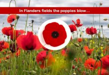 Red Poppy an Eternal Symbol