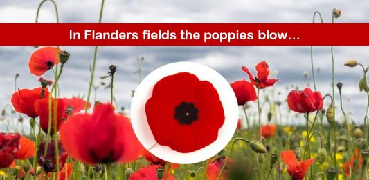 Red Poppy an Eternal Symbol