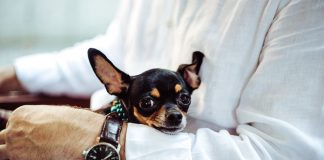 Indispensable health tips pet lovers must consider