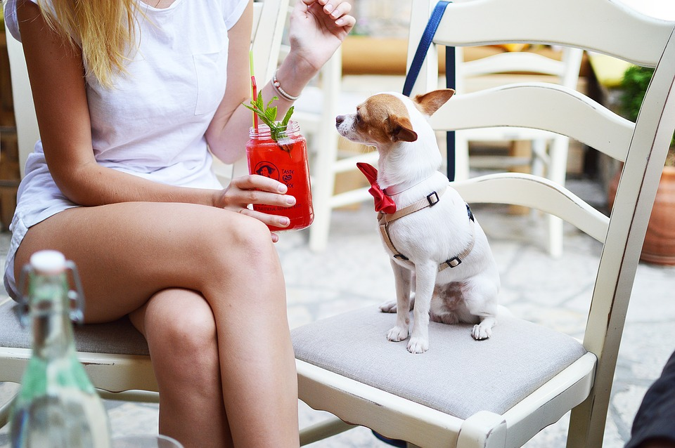 Indispensable health tips pet lovers must consider AllOntario