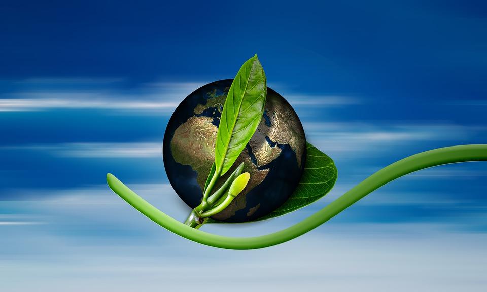 Reusable wine paper bags: an environmental friendly approach AllOntario