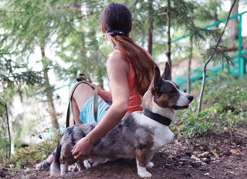 Hit the road Jack: take your dog for a long nature walk
