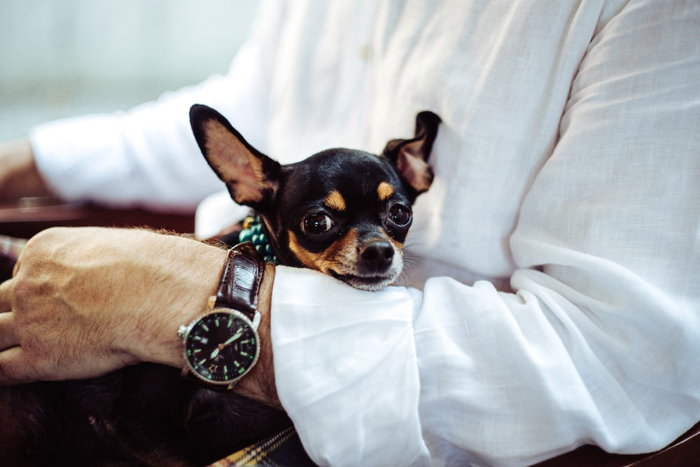 6 Pet Care Tips to Follow Amid the Lockdown