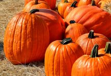 Why 2 Tablespoons of Pumpkin Seeds Daily Is a Must for Everyone?