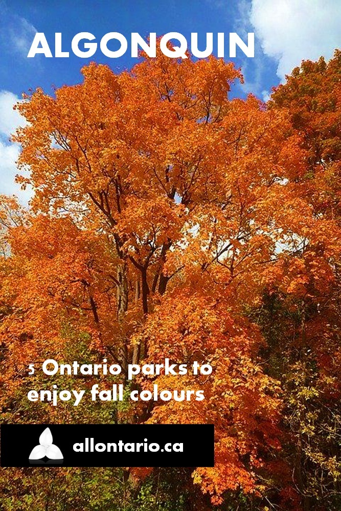5 Ontario Parks to Enjoy Fall Colours