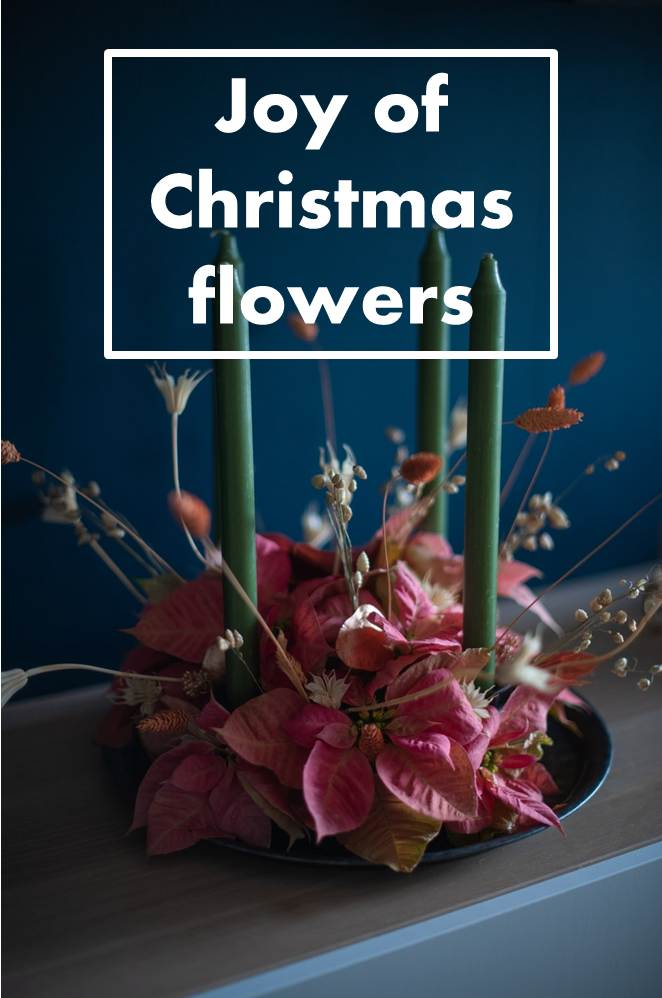 6 Types of Christmas Flowers
