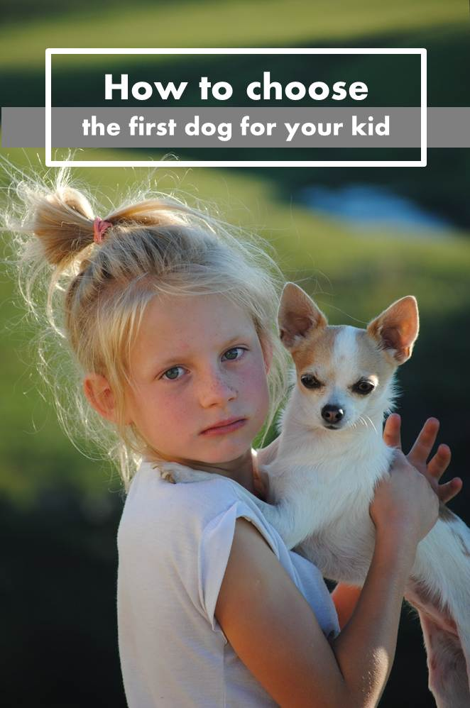 How to choose the perfect first dog for your kids
