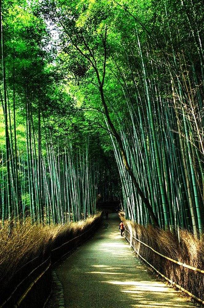 11 The Most Unusual Tree Alleys in the World