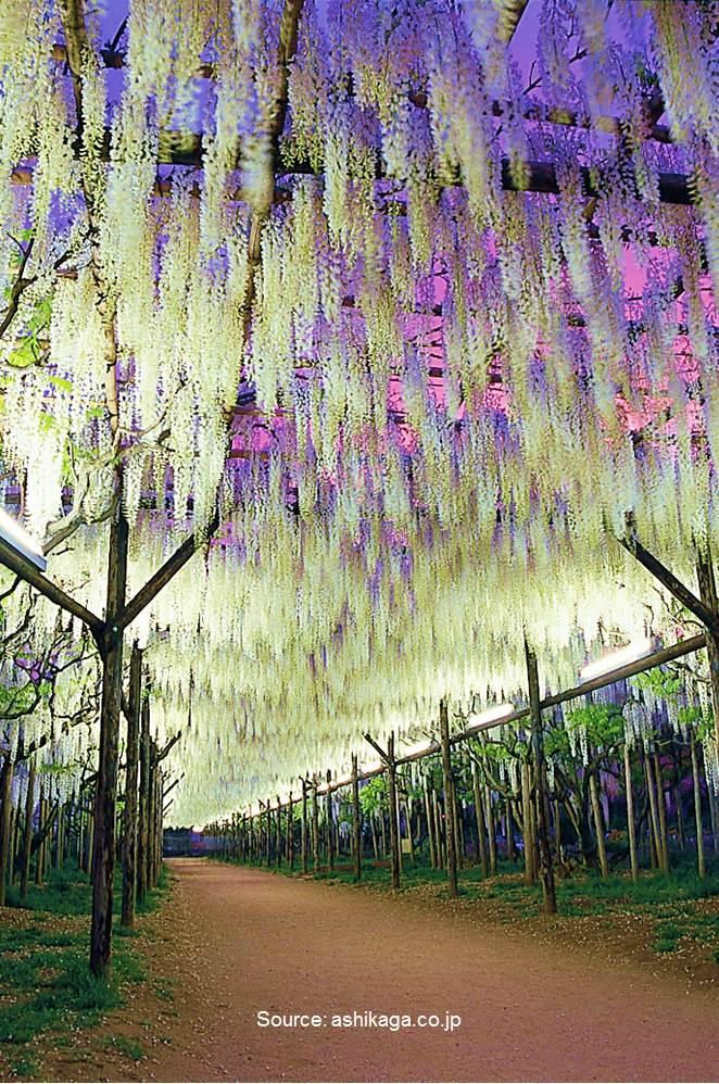 10 World's Most Stunning Flowering Tree Displays