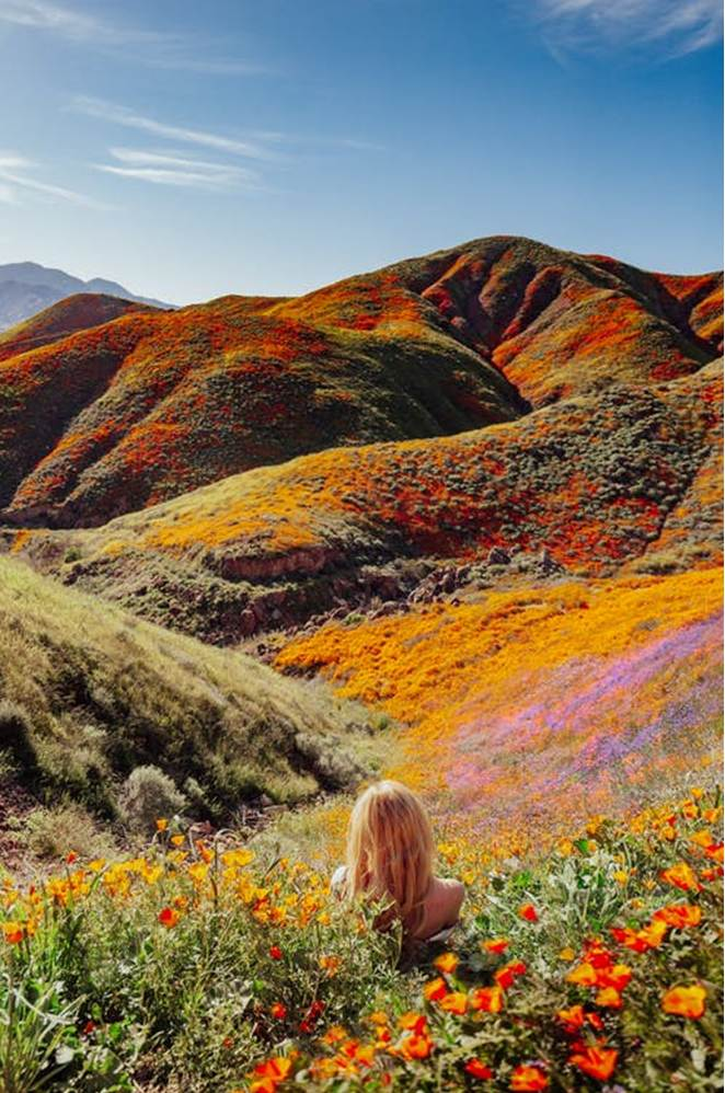 12 World's Amazing Wildflower Super Blooms