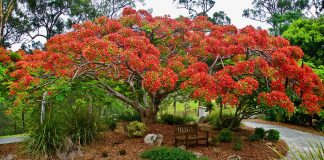 10 World's Most Stunning Flowering Tree Displays