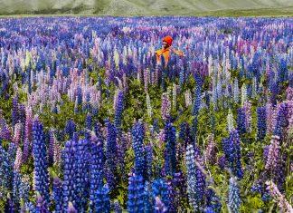 12 World's Amazing Wildflower Super Blooms