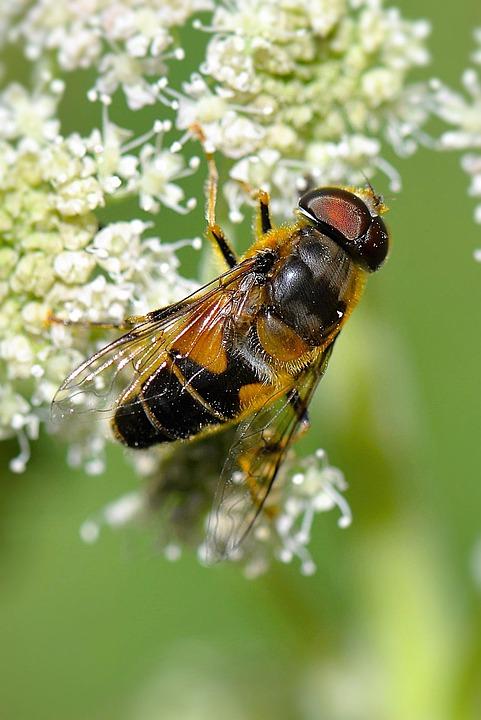 Nature Macro Photography Tips